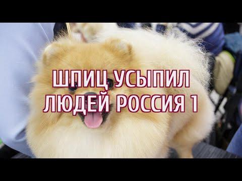 На «Россию 1» пожаловались из-за пса-гипнотизера