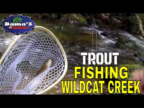 TROUT FISHING WILDCAT CREEK NORTH GEORGIA CATCH AND CLEAN