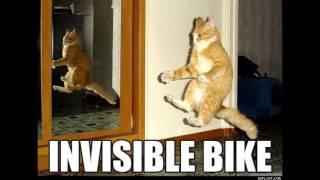 Mozger Blog - Шарик.Кот-миллионер. (История мема Invisible Bike Cat)