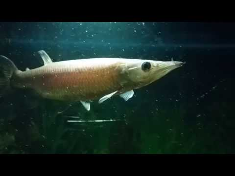 Monster Fish Keepers Poland 2017  act 1