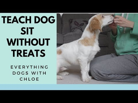 HOW TO TRAIN YOUR DOG TO SIT WITHOUT TREATS