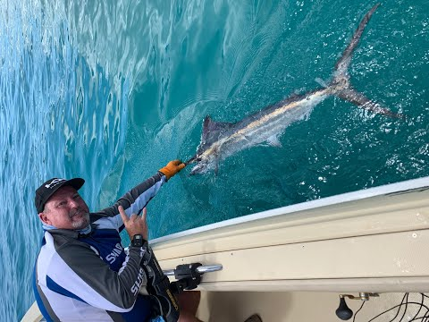 Marlin Fishing Hervey Bay