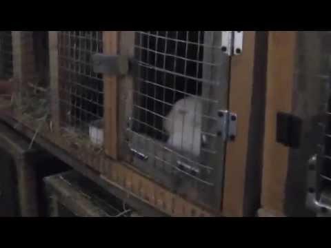 Кроликоферма Смирновой С.В. Конструкция клеток для кроликов