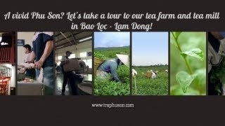 A vivid Phu Son? Let's take a tour to our tea farm and tea mill in Bao Loc - Lam Dong!