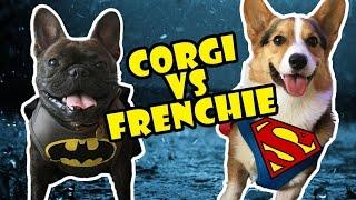 CORGI vs FRENCH BULLDOG!! BATMAN vs SUPERMAN thumbnail