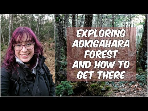 """Exploring Aokigahara Forest: What is the """"Suicide Forest"""" and How To Get There"""