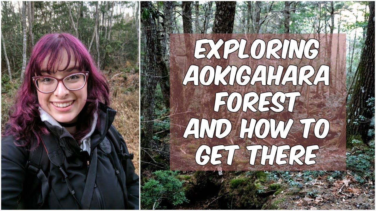"Exploring Aokigahara Forest: What is the ""Suicide Forest"" and How To Get There"