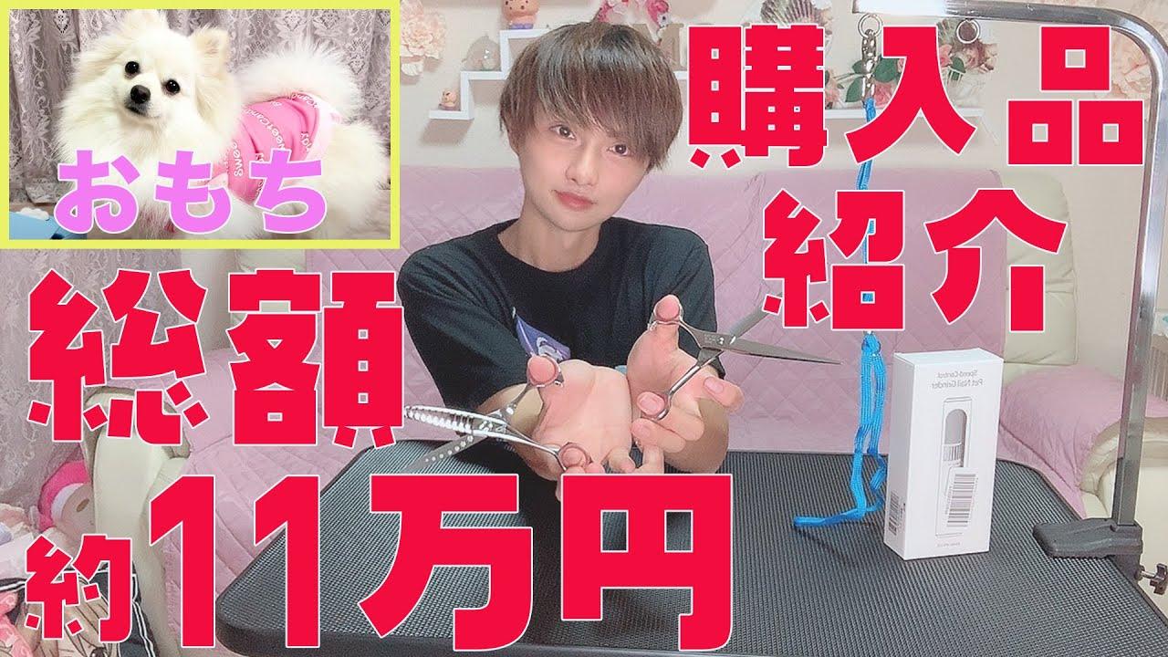 【購入品】愛犬おもちのために総額10万円以上のアイテムを揃えました!!