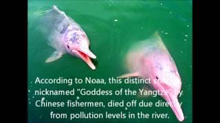 Environmental Degradation along the Yangtze River