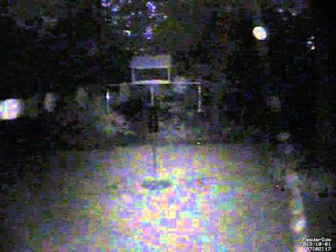 Feedercam Capture (2013-10-01)