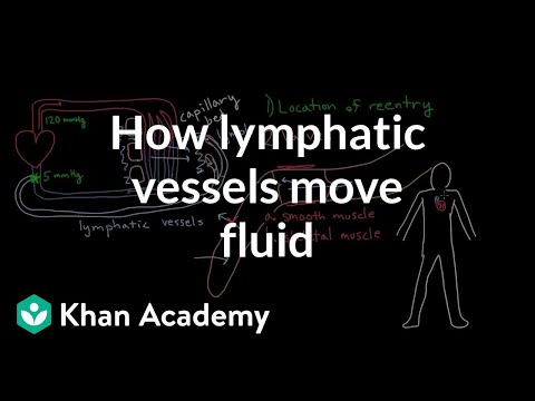 How lymphatic vessels move fluid | Lymphatic system physiology | NCLEX-RN | Khan Academy