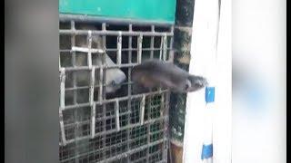 Диких животных везли в автобусе в тесноте, без воды и еды