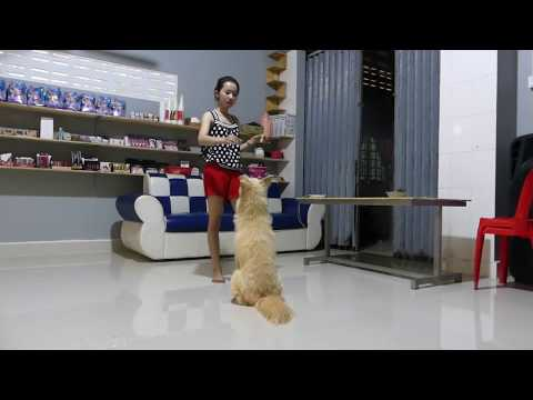 CUTE AND FUNNY DOG VIDEOS COMPILATION 2019  –  LOVELY SMART DOG JUMING ON HER CUTE ONWER