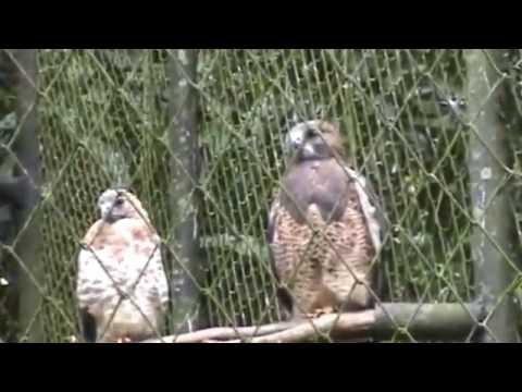 Zoo Ave Costa Rica: visita con mi princesa 17-07-2016