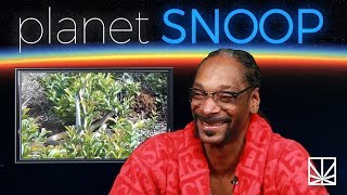 Snoop Dogg Reacts to a Video of Two Snakes Making Love | PLANET SNOOP