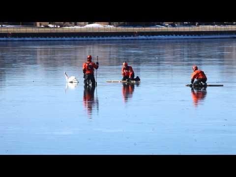 Coast Guard saves swan