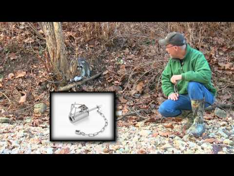 DEER Management: Predator Trapping Spree (#161) @GrowingDeer.tv