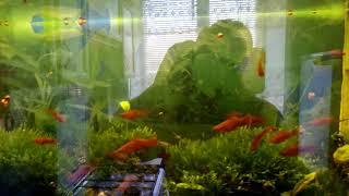 Два аквариума без многолетнего обслуживания