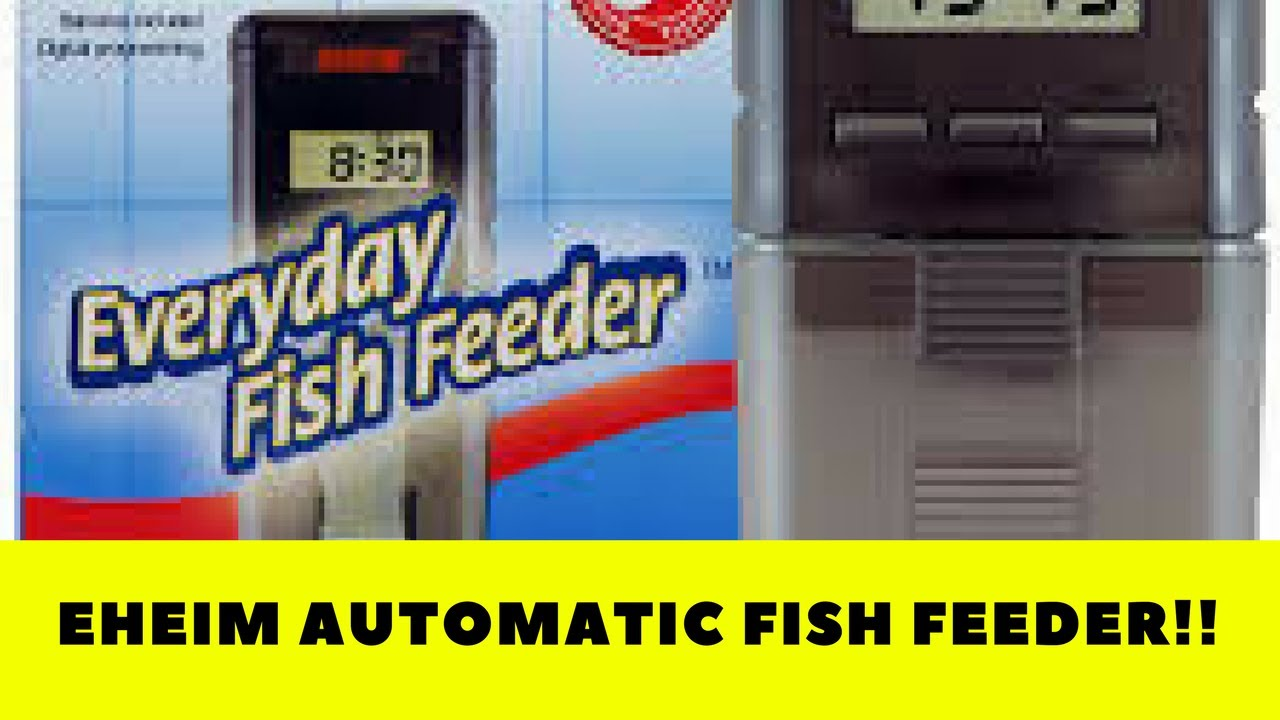 fish feeder youtube watch automatic everyday action eheim in