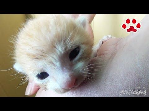 仔猫まやの隔離生活の終わり Kitten and infectious diseases