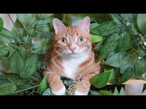Why Do Cats Love Trees So Much?