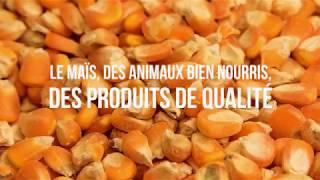 Le maïs, des animaux bien nourris, des produits de qualité