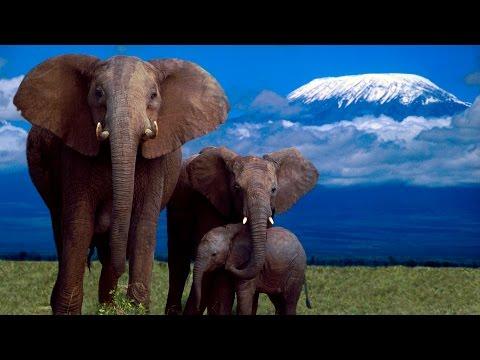 السياحة المذهلة | تغطية الأخ محمد السهلي لقمة جبل كليمنجارو  تنزانيا | Mount Kilimanjaro in Tanzania