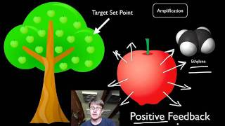 Positive and Negative Feedback Loops
