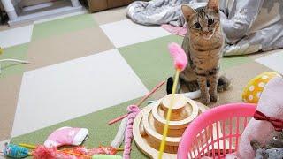 朝起きたら子猫がお家にネズミを運んでました