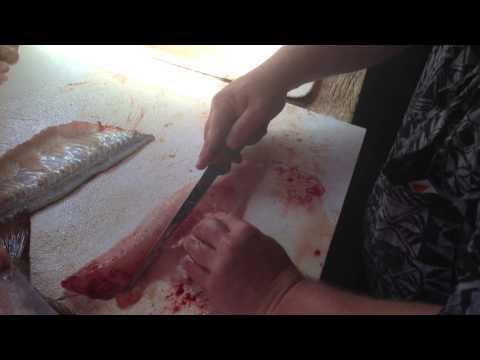 Proper way to Clean a walleye.  Zipping a walleye!