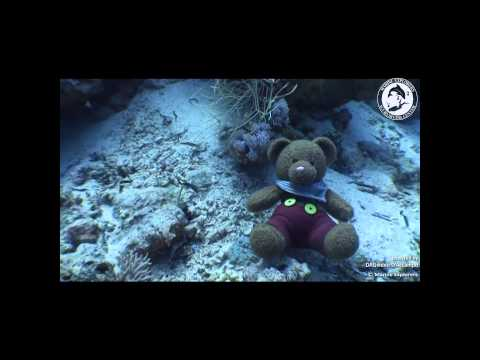 Marine Explorers - Liveaboard, Egypt, 2015, SCUBA diving