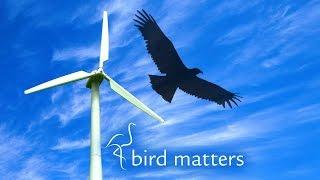 Wind Farms vs Birds – Bird Matters S01E09