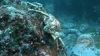 Баренцево море. Дальние зеленцы.(Школа технического дайвинга. http://WWW.DIVESCHOOL.SPB.RU +7 812 642 48 50 Обучение дайвингу подводной фотографии и видеосъе..., 2010-07-14T16:34:32.000Z)