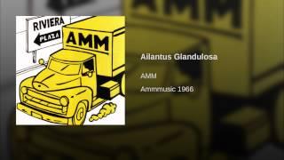 Ailantus Glandulosa