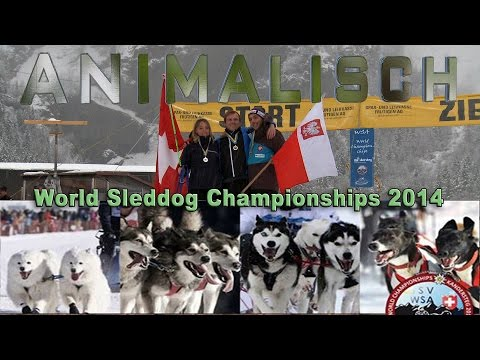 ANIMALISCH Nr. 19 @ World Sleddog...
