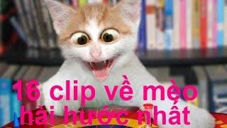 16 clip về mèo hài hước nhất