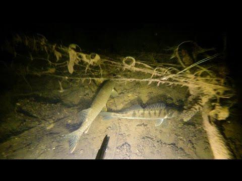 Подводная охота. Дулепова