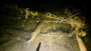Подводная охота. Дулепова яма.(Подводная охота на реке Ахтуба. Место - Дулепова яма. Максимальная глубина с низким уровнем воды 16,4 метра...., 2014-12-07T16:02:39.000Z)