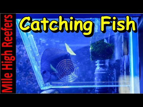 Catching Troublesome Fish With The Aqua Medic Fish Trap