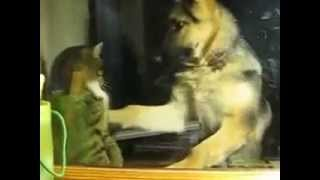 Прикол с животными, тяжелые отношения)))...