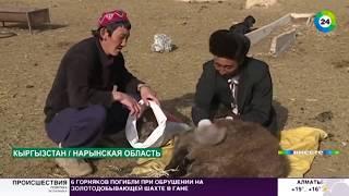 Трудная дорога домой: возвращение памирских кыргызов