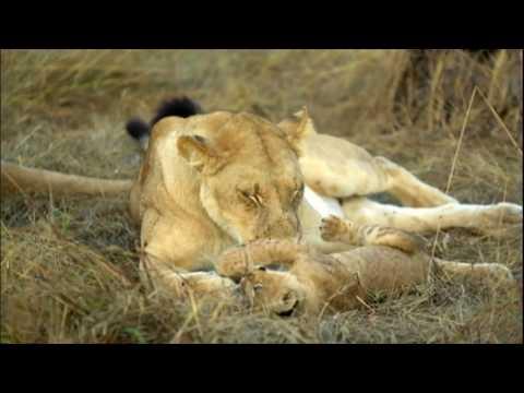 50x1 Visita A África Selvagem Em Uma Viagem Por Botsuana
