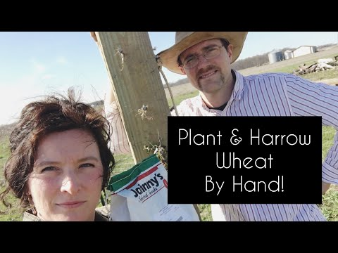 Confessions of Harrowing & Planting WHEAT BY HAND | Front Porch Catholic | Vlog