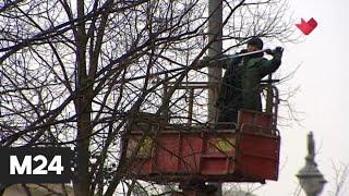 """""""Это наш город"""": в Москве начались работы по обрезке деревьев - Москва 24"""