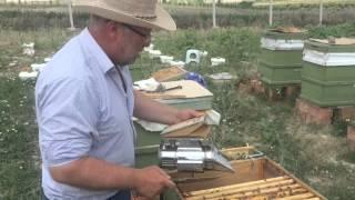 Ana arı, Arıcılık, Bal hasadı,  Arıcı İrfan Nacak