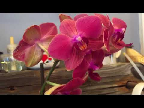 Orchid growing tips (myths) I've ignored.
