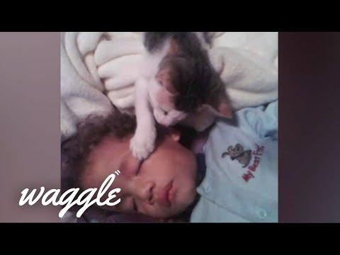 Wakeup Pets   Funny Pet Videos