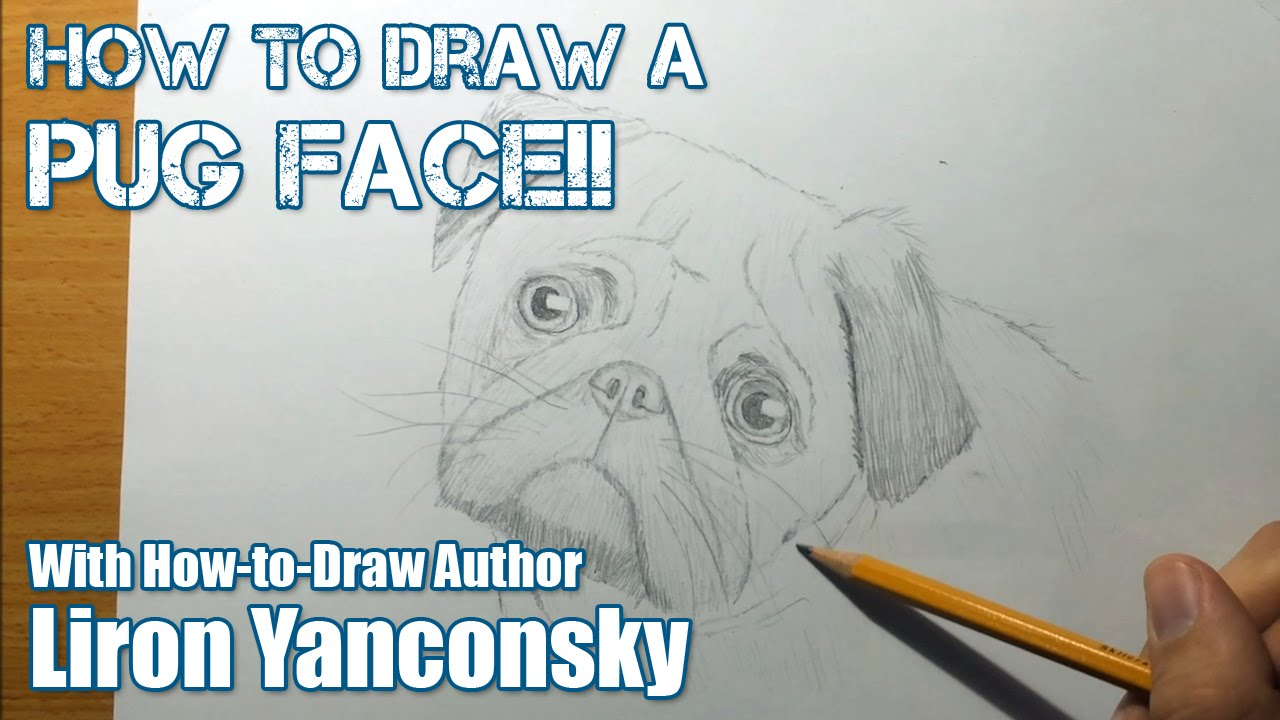 Realistic Dog Drawing Step By Step How to Draw a Pug Dog ...