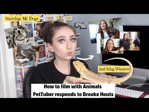 How to Film with Animals | PetTuber responds to Brooke Houts