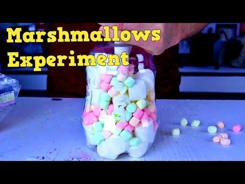 Marshmallows Experiment